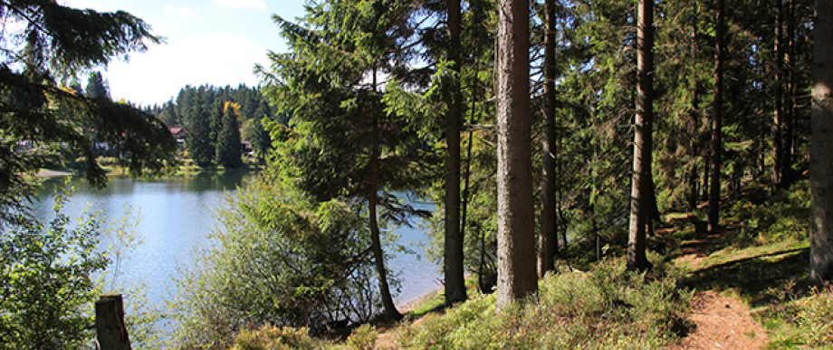 Das Kreuzeck - Campingplatz im Harz
